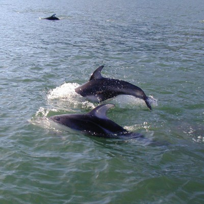 dolphins, coean inlet, fishing, boating, beach, marine