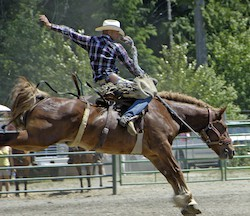 central coast, rodeo, horse riders, bulls,