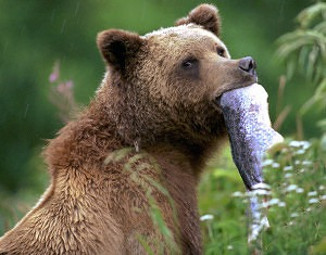 wildlife photo bear