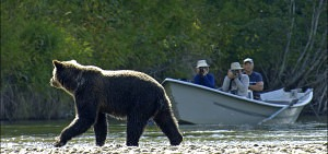 Bella Coola bear viewing adventure tour